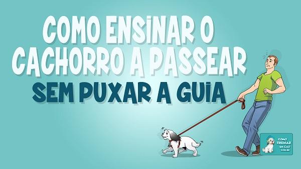 Como ensinar o cachorro a passear sem puxar a guia