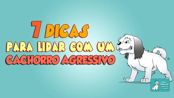 7 dicas para lidar com um cachorro agressivo